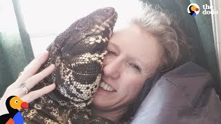 Cuddly Tegu Lizard Is So Spoiled By His Mom | The Dodo
