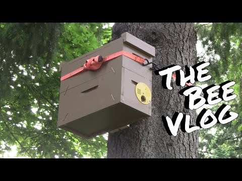 Swarm Trap Success    Bee Vlog  136   Jun 14, 2014