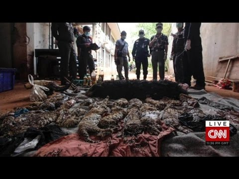 Gruesome find in Thai Tiger Temple