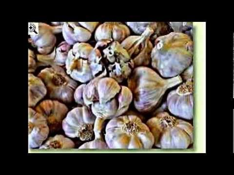 Heilpflanzen / Knoblauch