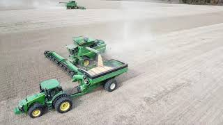 Soybean Harvest 19