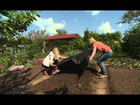Jak správně vysadit melouny a jak se o ně starat?