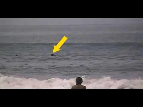 XHKG tv ( Tiburón Ballena En Matanchén )