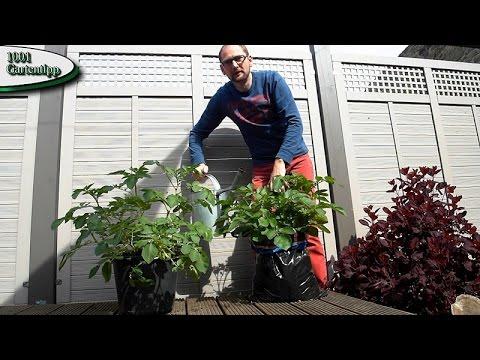 Gartentipp März 0317 Kartoffeln Im Sack Für Balkon Terasse Und Garten