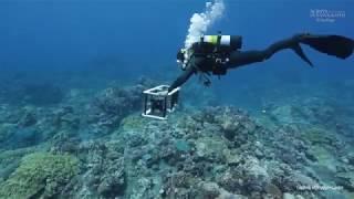 3D Coral Reefs