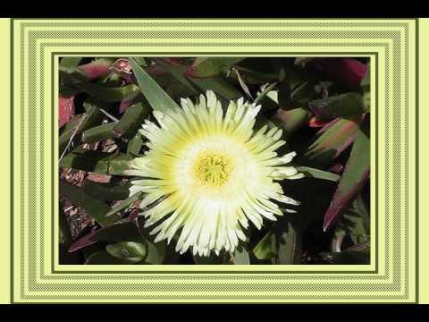 Bloemen uit Afrika wmv
