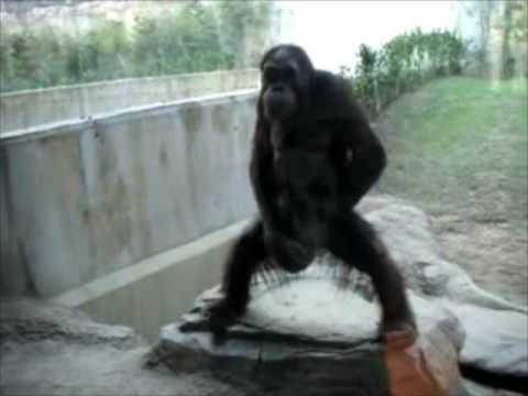 Monkeys jacking off