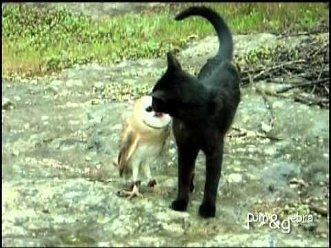 Amizade exótica: Gato e Coruja se divertindo!