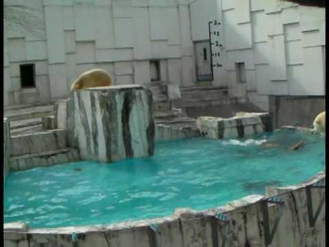 イコロとキロル初活鮭 PART-1(円山動物園)