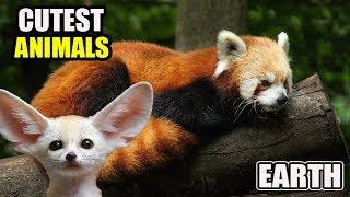 10 Cutest Animals on Earth