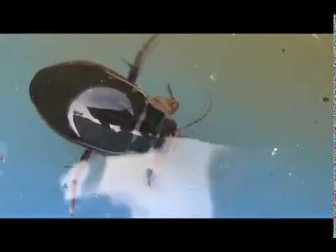 ловля на плавунец