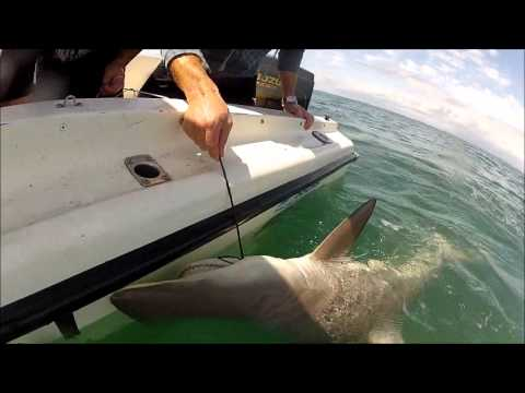moreton bay shark fishing