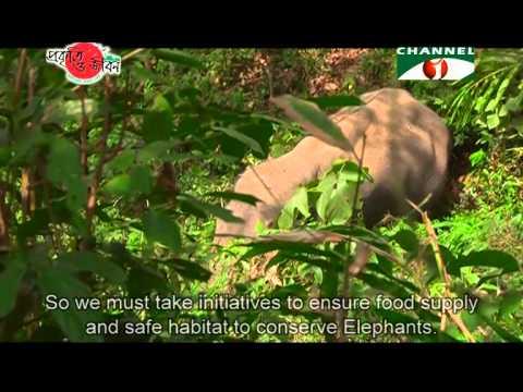 Nature and Life - Episode 164 (Wild Elephant)