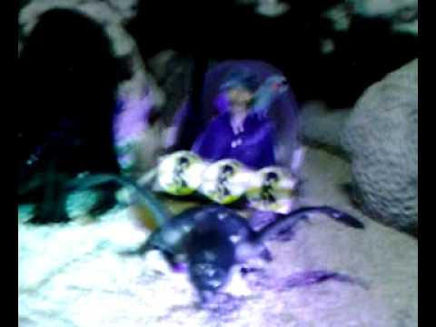 Abg Telanjang Videos | Abg Telanjang Video Codes | Abg Telanjang Vid ...