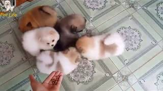 Baby Dogs | Cute and Funny Dog Videos Compilation 2019| PET LIFE #6