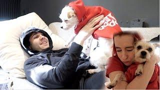 DAVID HATES DOGS???