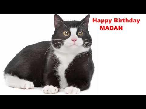 Madan   Cats Gatos - Happy Birthday