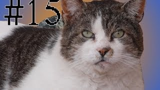 Cat Tales - Butchy Face