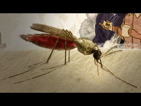 Herbs And Empires: A Brief History Of Malaria Drugs