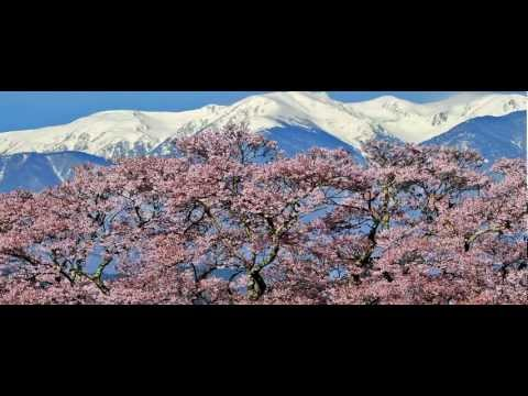 Moriyama Naotaro - Sakura