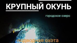 Подводная охота на окуня