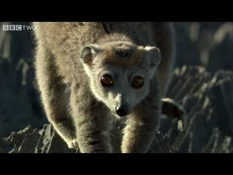 Cute Lemurs Cross Razor-Sharp Cliffs - Madagascar, Preview - BBC Two