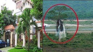 5 Loài cây Tuyệt Đối Cấm trồng trước Cổng Nhà dễ dụ Ma Quỷ rước thêm họa vào thân - Cần Bỏ Ngay