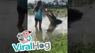 Girl Feeds Giant Gator || ViralHog