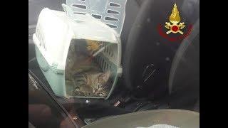 Gatti chiudono le portiere dell'auto e lasciano fuori i proprietari: salvati dai vigili del fuoco