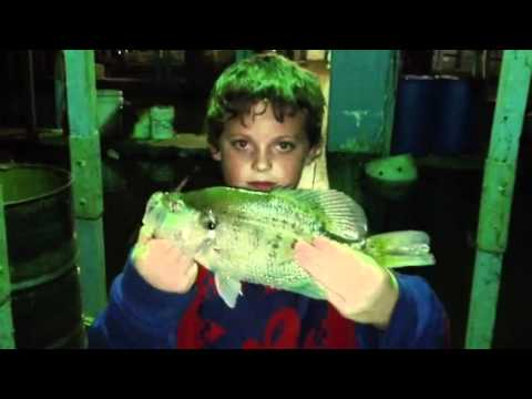 Crappie Fishing Uncle Ricks Duck Cove Marina NIGHT TIME!  2