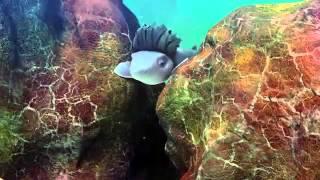 O Mar Não Está Pra Peixe Filme Completo & Dublado