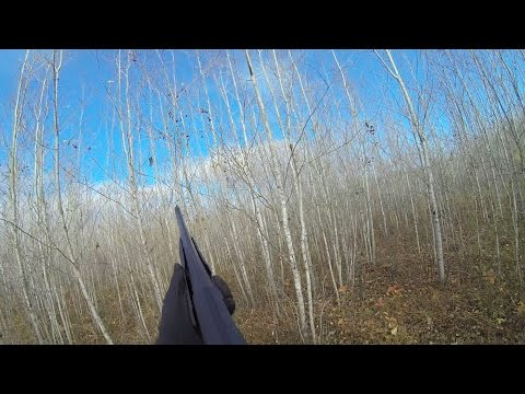 Grouse And Woodcock Hunting - October 2014 - US MN - Chasse Gelinotte Et Becasse- Octobre 2014