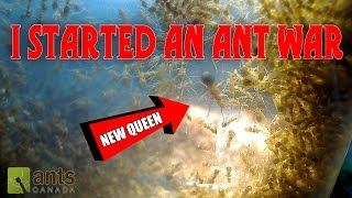 OH NO! I STARTED AN ANT WAR!