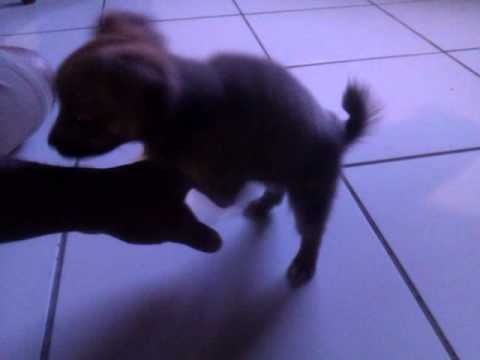 Ma Dog Foking Ma Hand! video
