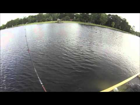 Alabama Rig Double Catch Bass Fishing Toledo Bend Jun 18 2012