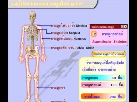 ระบบกระดูกและกล้ามเนื้อ