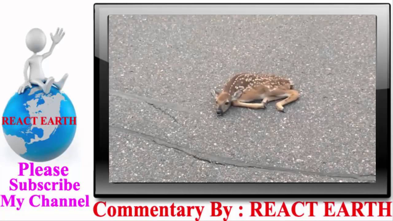 [REACT EARTH- Newborn Fawn Saved] Video