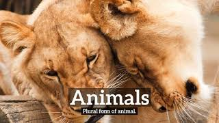 What is Animals? | How Does Animals Look? | How to Say Animals in English?