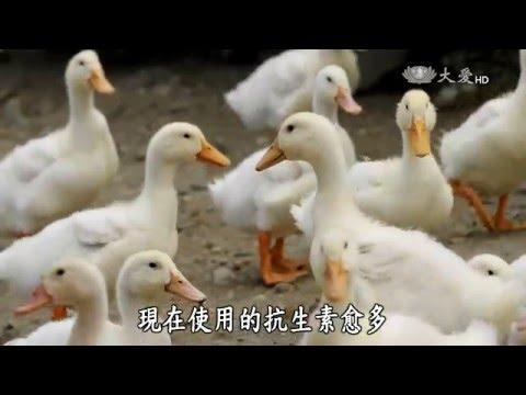 大愛-發現-20160130 超級細菌