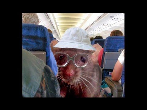 Ada Tikus di Airlines India