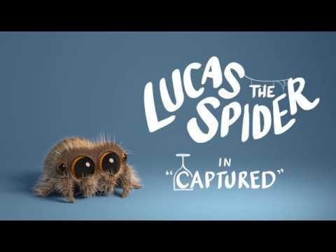 Lucas the Spider - Captured
