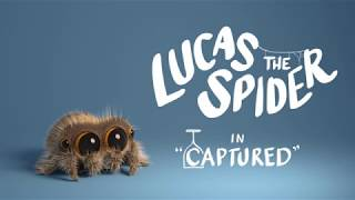 Lucas the Spider - Captured
