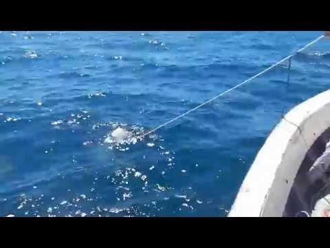 Pescaria De Tubarão 2015