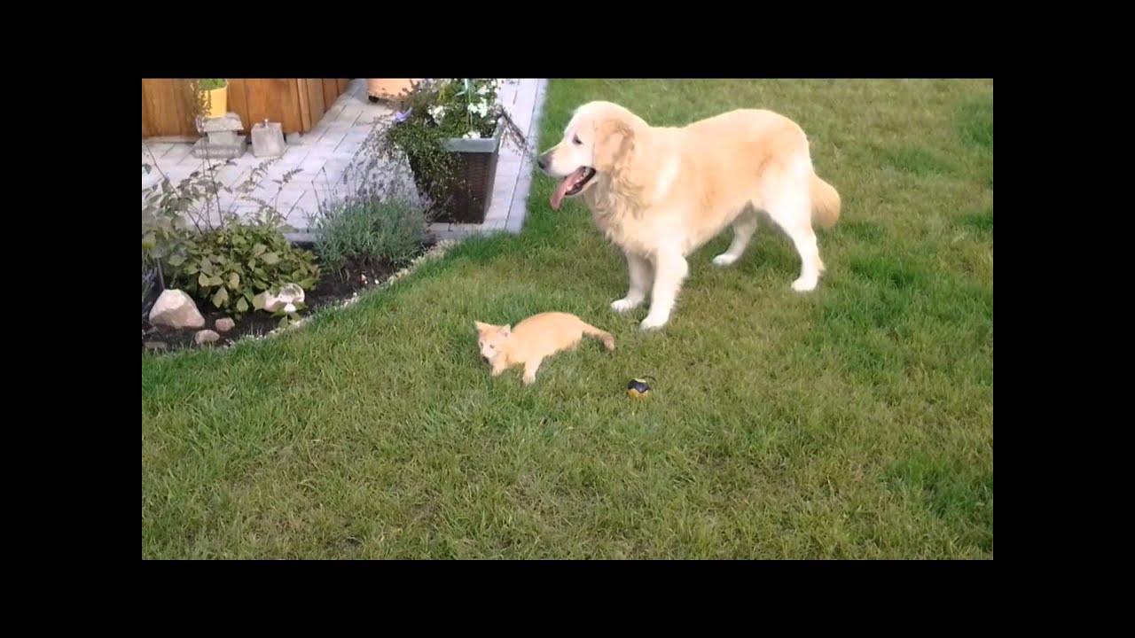 Lecken als Ausdruck der Zuneigung beim Hund - hunde
