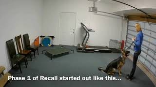 How To Teach Your GSD To Come When Called