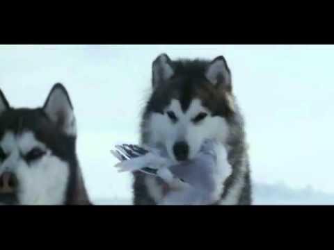 Câu truyện cảm động về những chú chó bị bỏ lại ở Nam Cực !
