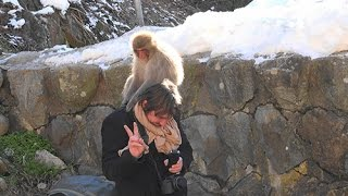 Snow Monkey - Jigokudani Monkey Park