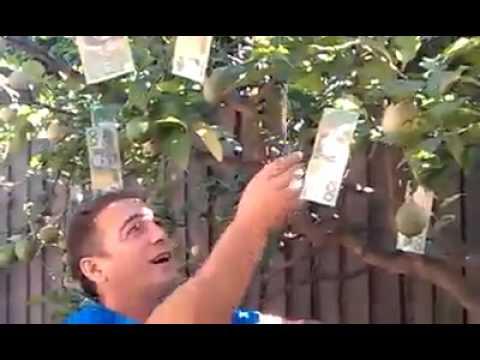 How Lebanese People Think You Make Money In Australia