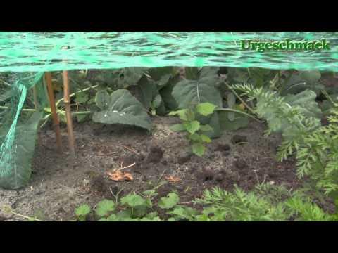 Gemüse Im Eigenen Garten Anbauen (Ep. 56)