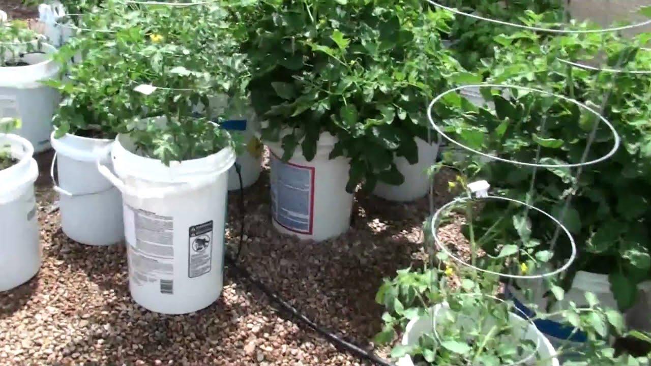 How To Make A 5 Gallon Bucket Garden